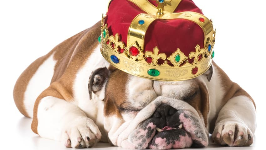 6 (Challenging) Reasons Why Content is King